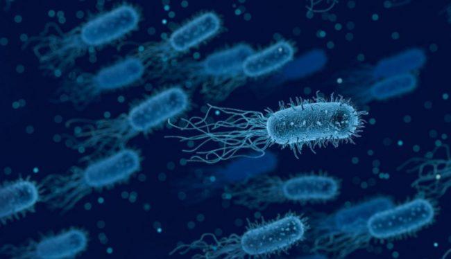 Бактерии вырабатывающие электричество