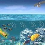 Флот США хочет использовать морских животных для обнаружения подводных лодок