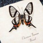 Крылья бабочки подсказали идею глазного имплантата