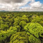 Космический лазер составит 3D-карту лесов нашей планеты